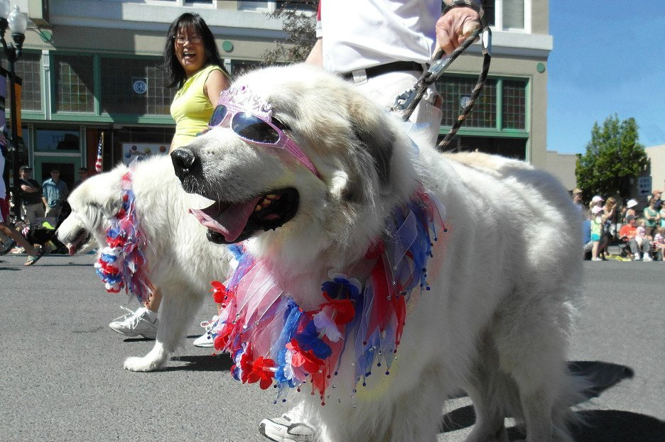 dogs in fourth of July parade